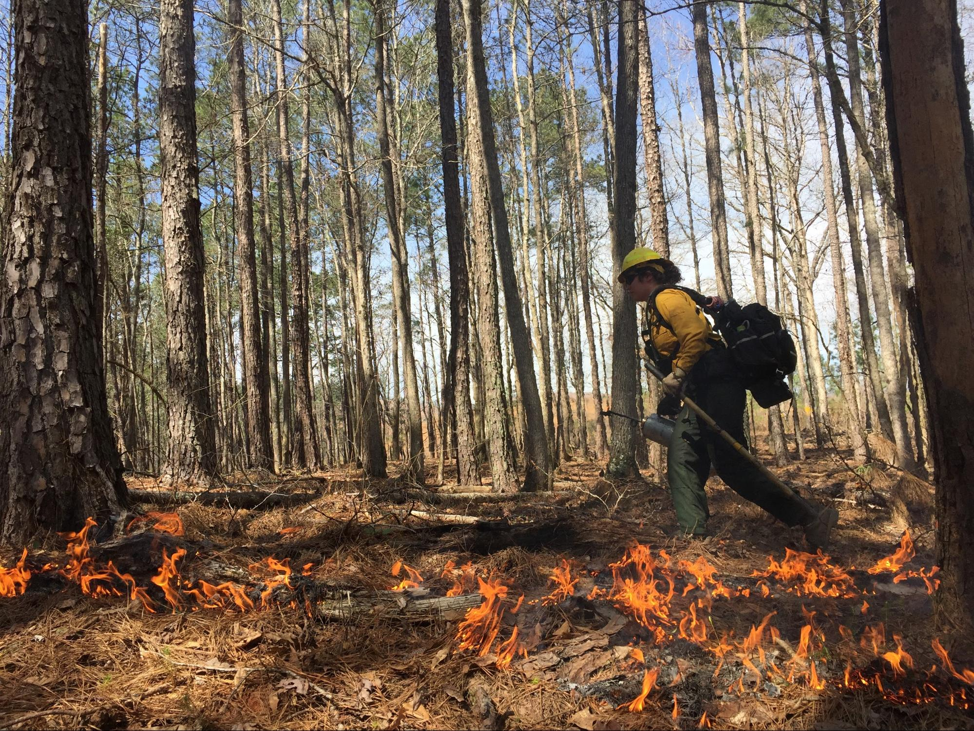 If we don\'t burn it, nature will\': Georgia blazes old fears ...