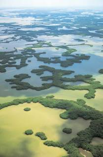 Ten Thousand Islands aerial view of mangrove islands in the saltwater estuary. Photo credit: Naples, Marco Island, Everglades CVB