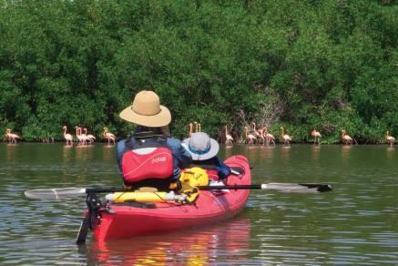 Sea kayakers approach flamingos on Cuba's southern coast.