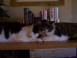 Roman and Savannah taking a nap on top of the TV stand a few years back.