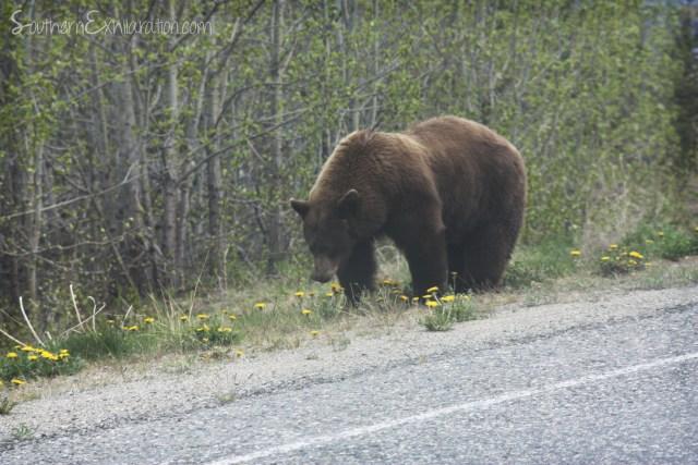 Views along South Klondike Highway
