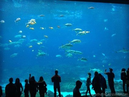 Georgia Aquarium | Atlanta, GA