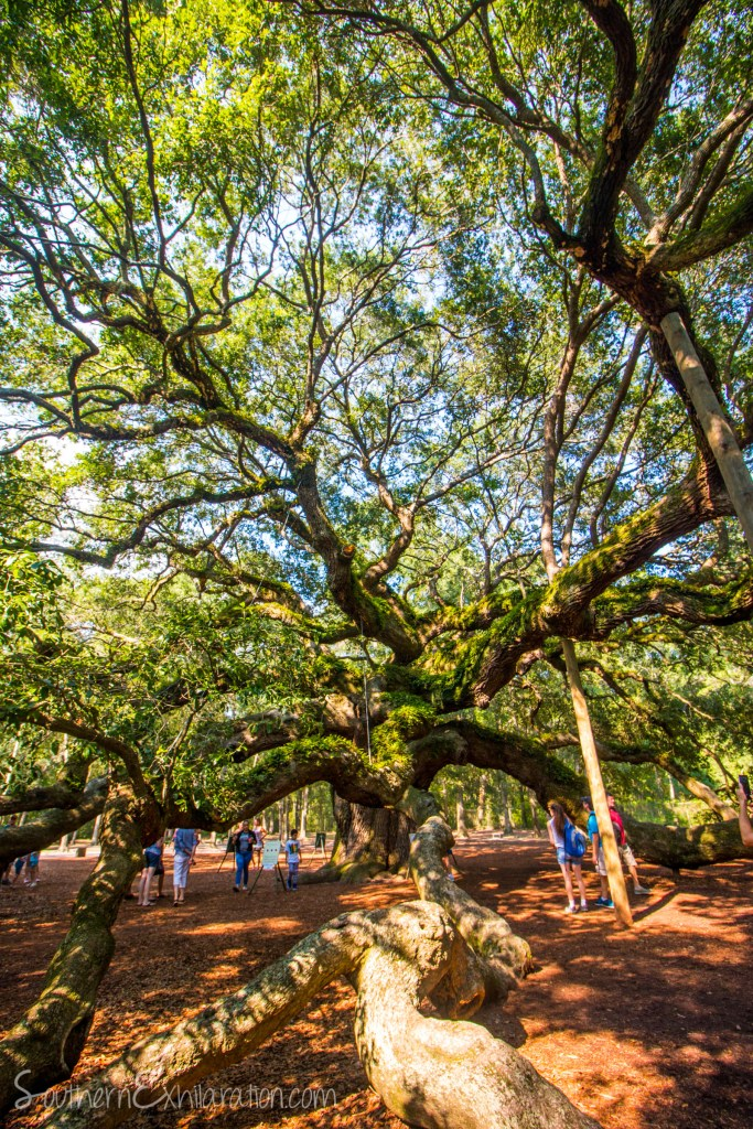 Angel Oak | Charleston, SC