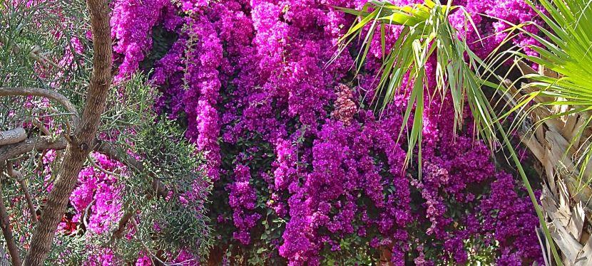 Jardin Majorelle…My Backyard Blooms