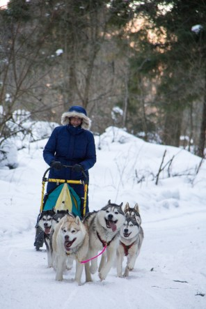 dmitrov-dogsledding-11