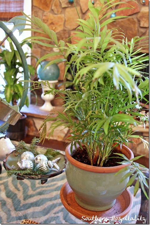 coffee table plant