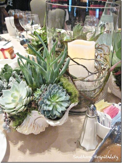 shells and succulents