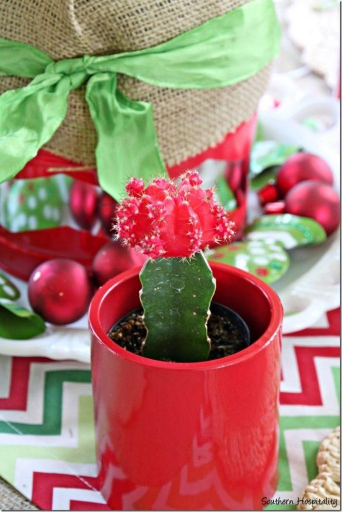 red cactus holder