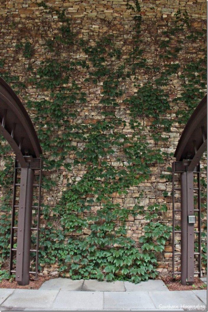 ivy stone walls