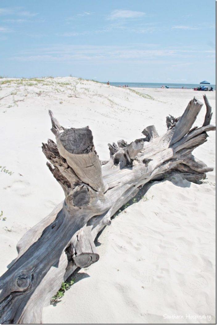 driftwod on beach