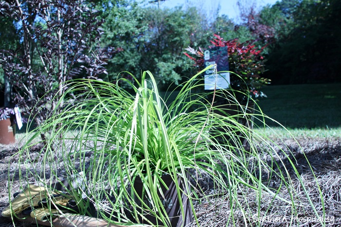 southern living plants20151017_002