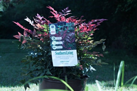 southern living plants20151017_004