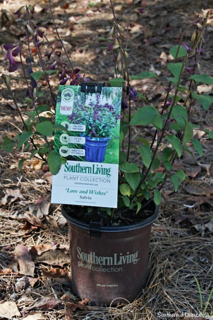 southern living plants20151017_005