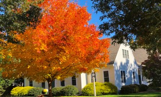 Fall Color on Cape Cod