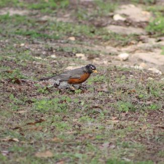 Not Sure what this one is saw him yesterday at Santos Campground