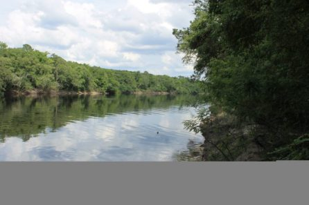 Pretty View of the Suwannee River 3