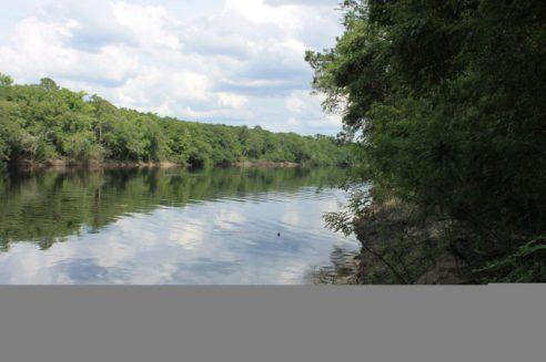 Pretty View of the Suwannee River 3
