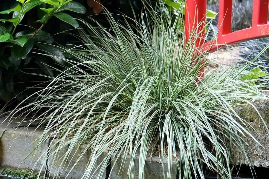 Zone 6 Perennials