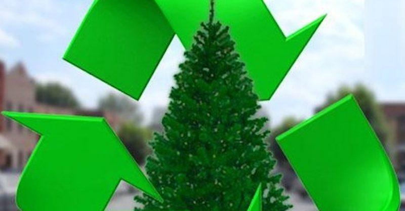 christmas-tree-recycling-program