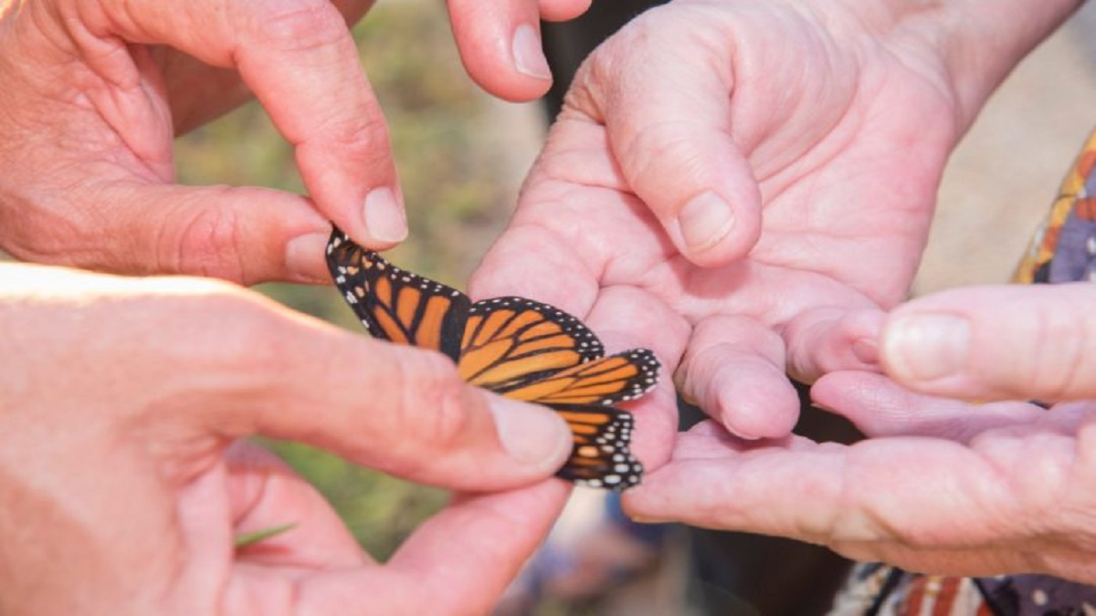CSM Heads into Autumn Hosting Colorful Virtual Events with Monarch Butterflies, Readings, Music, a Night of Engineering – and Much More