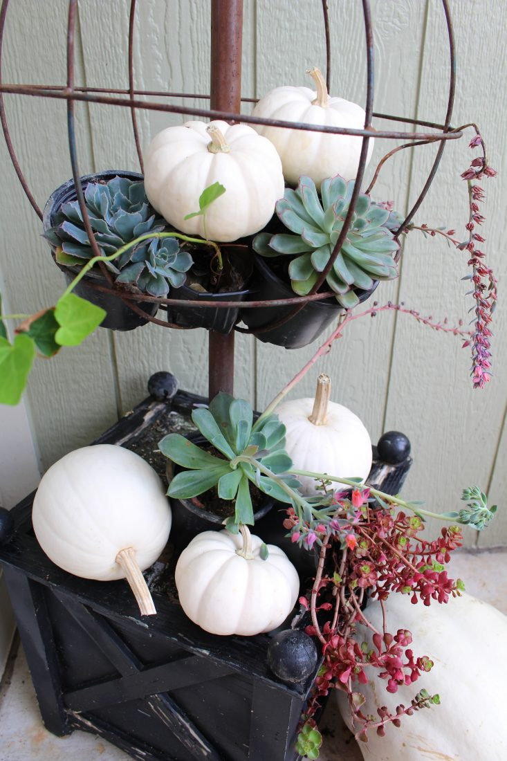 White Pumpkins and Succulents for Fall Decor