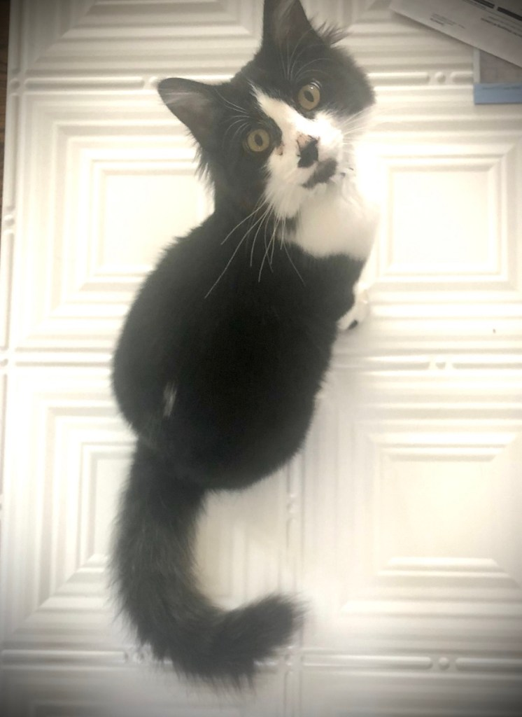 Black and White Cat on Ceiling Tile
