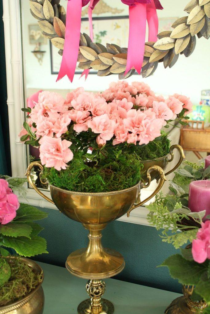Indoor Hydrangea and Azalea Garden Ideas