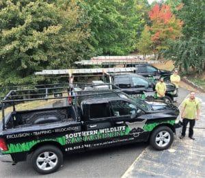 dead deer removal team