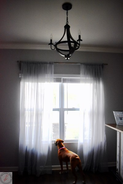 boxer dog looking out the window, wood chandelier, gray curtains, diy wood curtain rods
