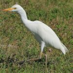 Egret-VistaView_TH8429