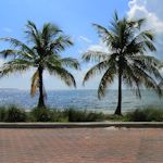 PalmTrees-VirginiaKeyBeach_TH47249