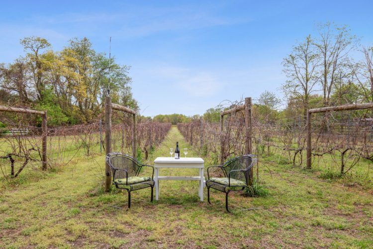 a photo of the vineyard with a table and wine glasses