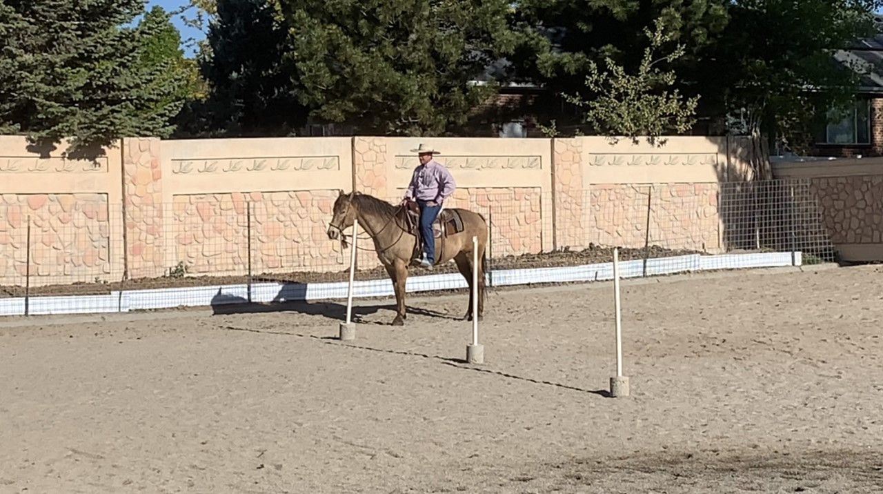 Two activities to practice yield the hind quarters