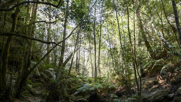 Rainforest glade South Lawson Park Photo: V Hong 2017