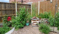 Oadby garden 3