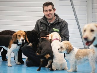 Allan Todd with some of the dogs he looks after at Dogs Aloud
