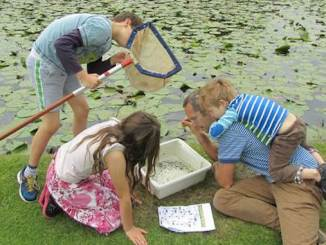 Fun at Dunham Massey this summer