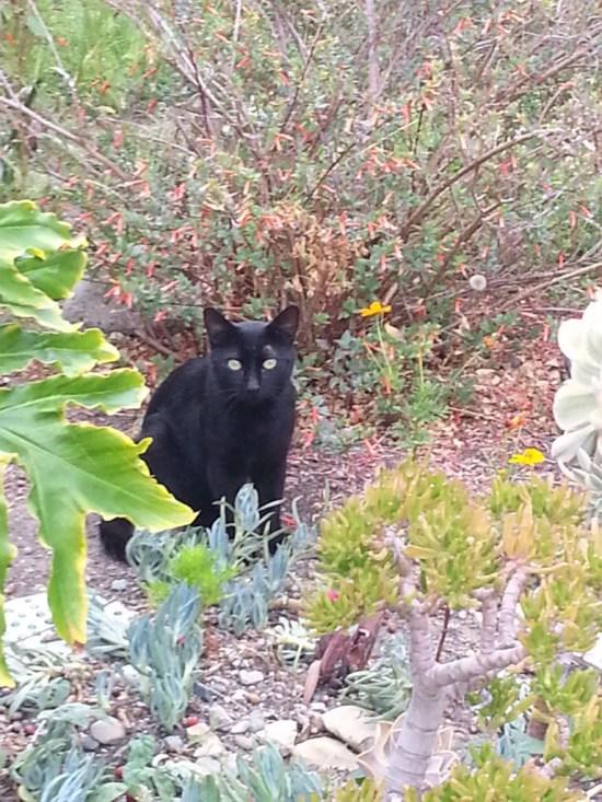 Black Cat by SouthOCBeaches.com