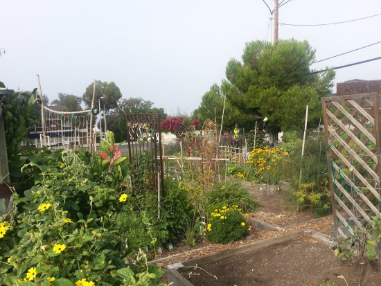 south laguna community garden park by southocbeaches.com