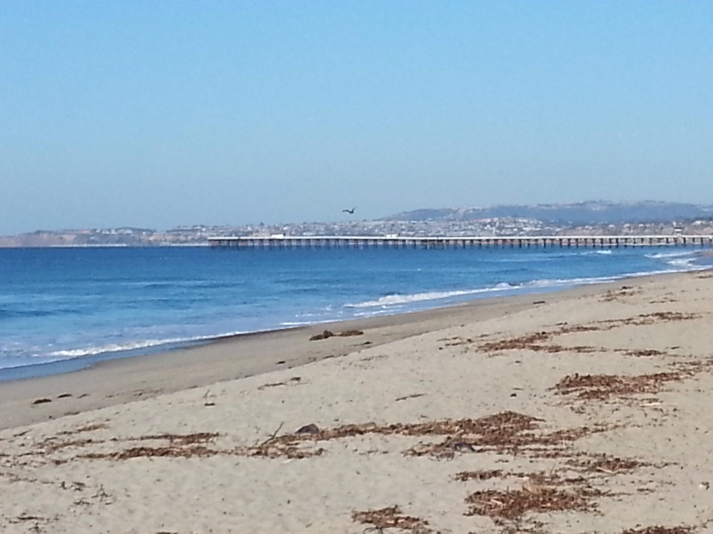 Laguna Beach City Council Contact