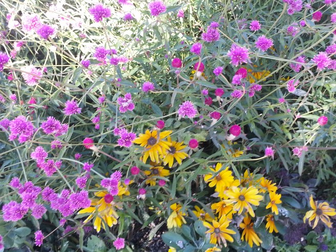 Coastal Flowers by southocbeaches.com