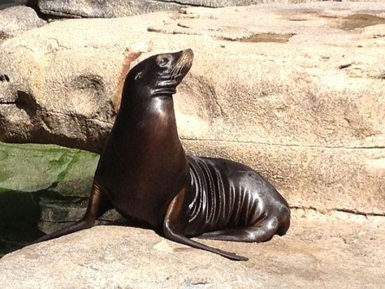 640px-Zalophus_Californianus_Cincinnati_zoo