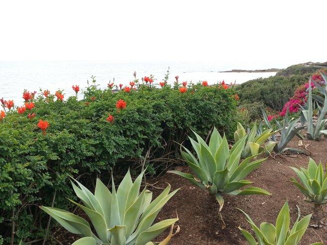 California Native Plants by southocbeaches.com