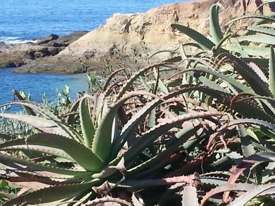 California Plants by SouthOCBeaches.com