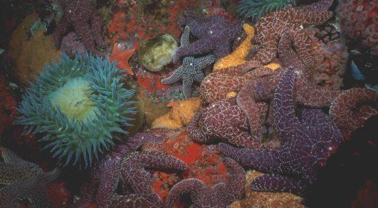 Image Courtesy of crystalcovealliance.org