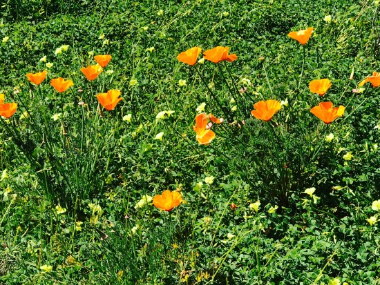 Nature by SouthOCBeaches.com