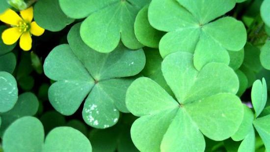 St Patrick's Day Courtesy of History.com