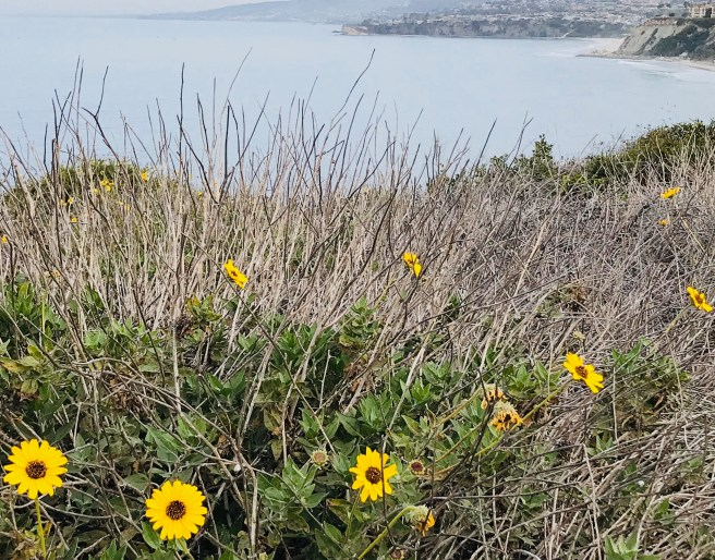 Dana Point Headlands Courtesy of SouthOCBeaches.com