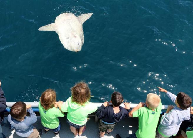 Image Courtesy of Ocean-Institute.org