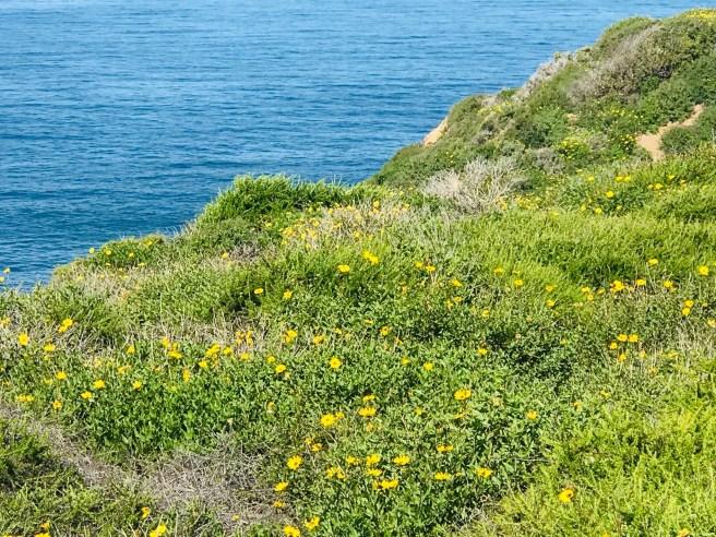 Dana Point Courtesy of SouthOCBeaches.com